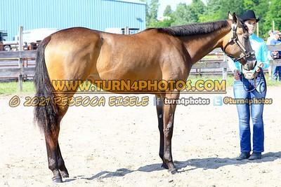 jr horse halter june 20--8