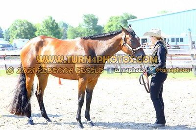 jr horse halter june 20--6