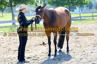 jr horse halter june 20-