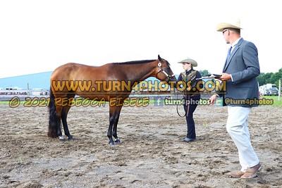 jr horse Halter  july 25--8