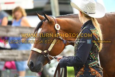 jr horse Halter  july 25--3