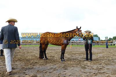 jr horse Halter  july 25--9