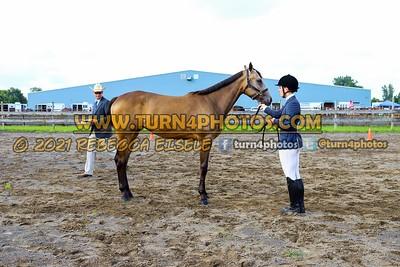 jr horse Halter  july 25--10