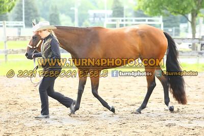 jr horse Halter  july 25--2