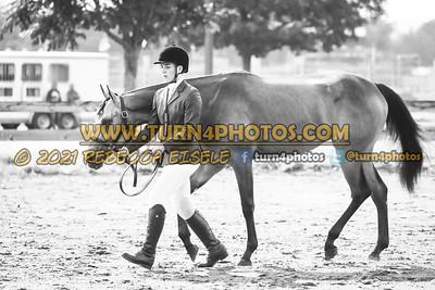 jr horse Halter  july 25--4