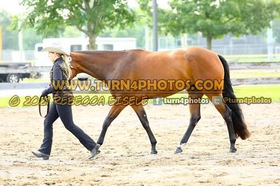 jr horse Halter  july 25-