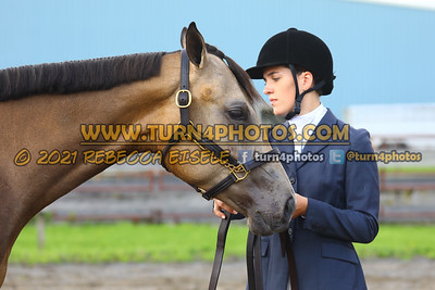 jr horse Halter  july 25--6