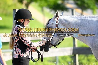 Jr Horse Halter 08-15 --2