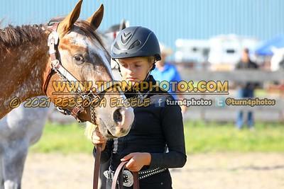 Jr Horse Halter 08-15 --17