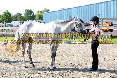 Jr Horse Halter 08-15 --13