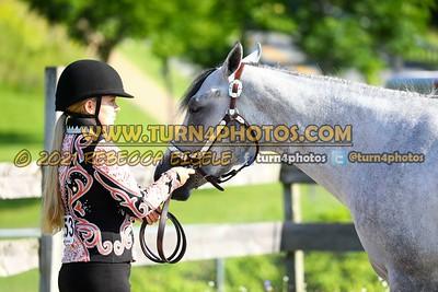 Jr Horse Halter 08-15 --7