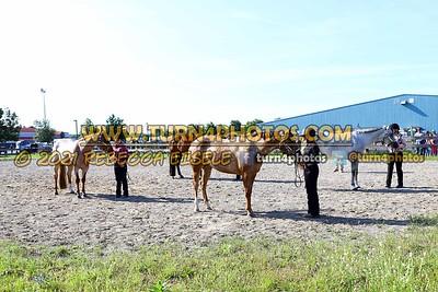Jr Horse Halter 08-15 --20