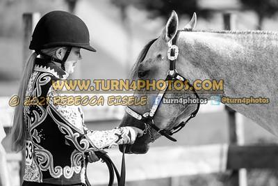 Jr Horse Halter 08-15 --3