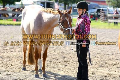 Jr Horse Halter 08-15 --11