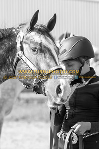 Jr Horse Halter 08-15 --18