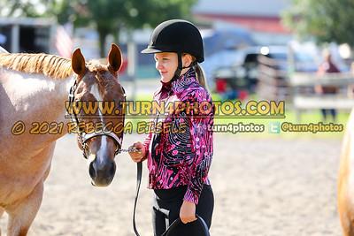 Jr Horse Halter 08-15 --10