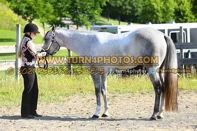Jr Horse Halter 08-15 --5