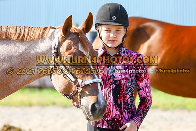 Jr Horse Halter 08-15 --14