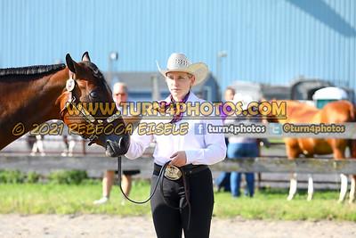 Jr Horse Halter 08-15 --16