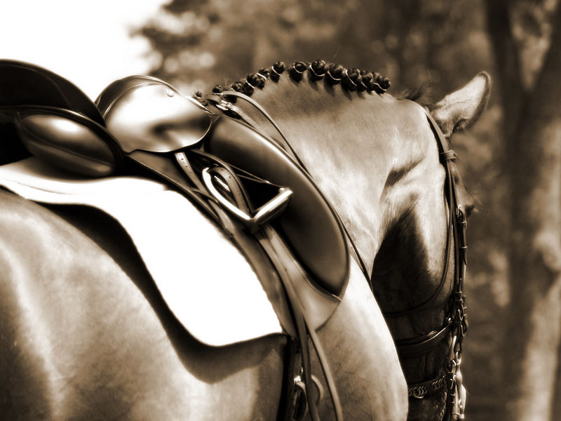 #14 Button Braids and Shiny Tack