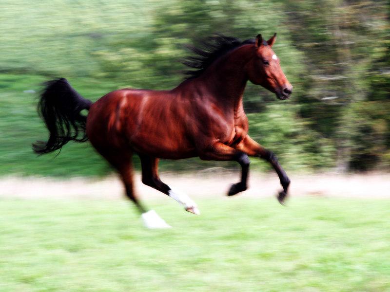 #17 Gallope