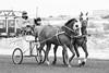 D4G_2194 Cutter Racing
