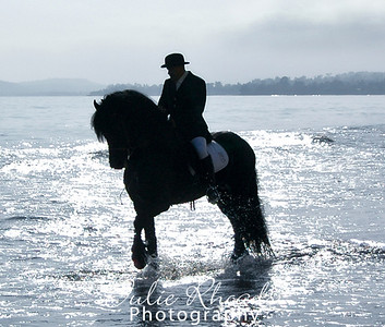 guy_friesian copy23
