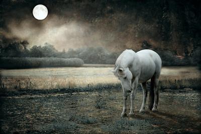 The Secret Whisper Of Moon 1 adj