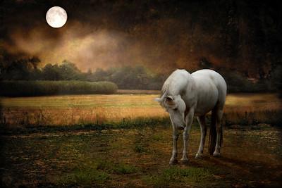 The Secret Whisper Of Moon