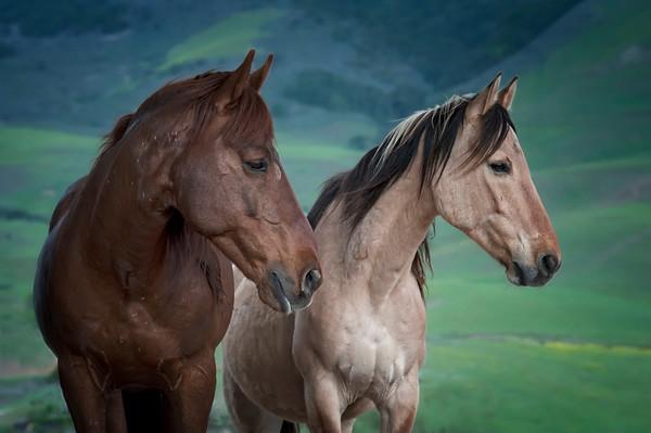 Equine Fine Art Photography