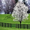 Spring Photographs
