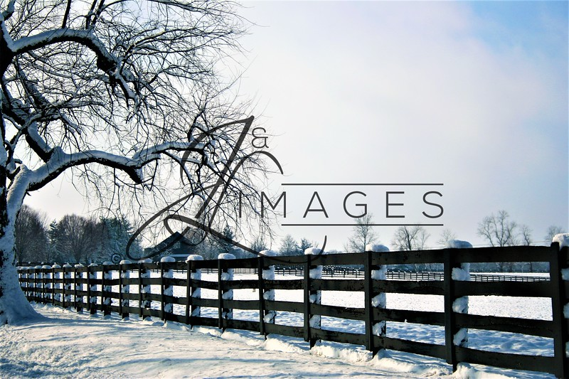 Winter Photographs