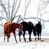 Winter Photographs