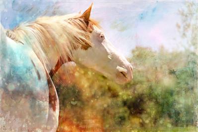 Watercolors 2br
