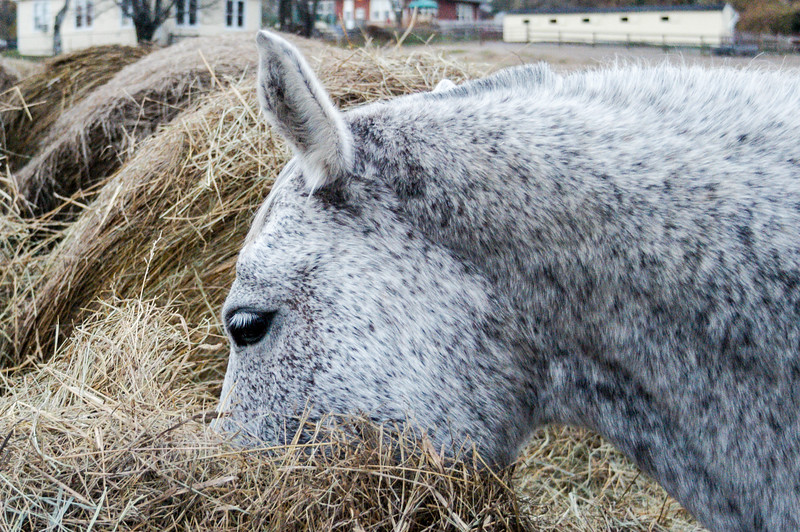 Blue Gets Into Her Hay