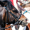 Equine Concentration