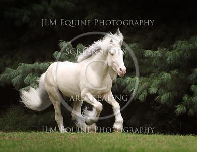 Excalibur Elite Equine's Emblazon