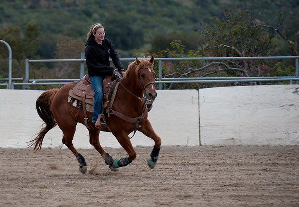 Horses and Roping