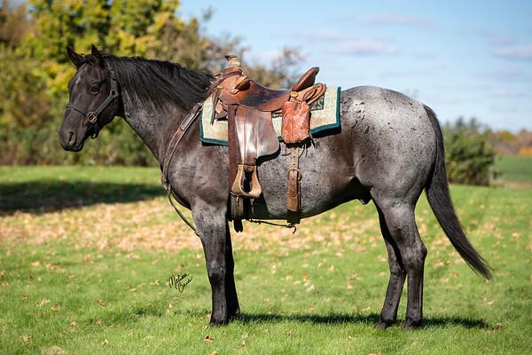 Janssen Performance Horses