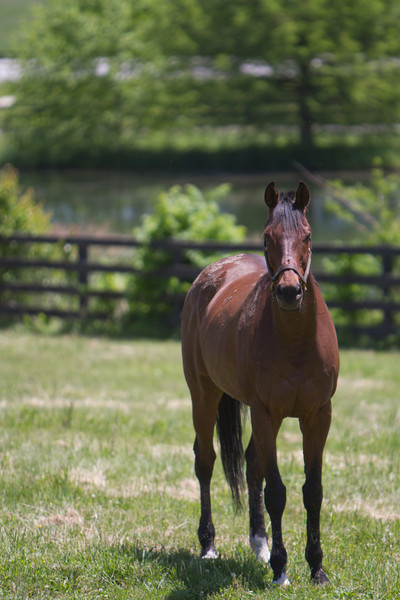 IMAGE: http://www.photographybymalcolm.com/Equine/Miscellaneous/Old-Friends-Equine/i-8F4jQCC/0/L/IMG_2818-L.jpg
