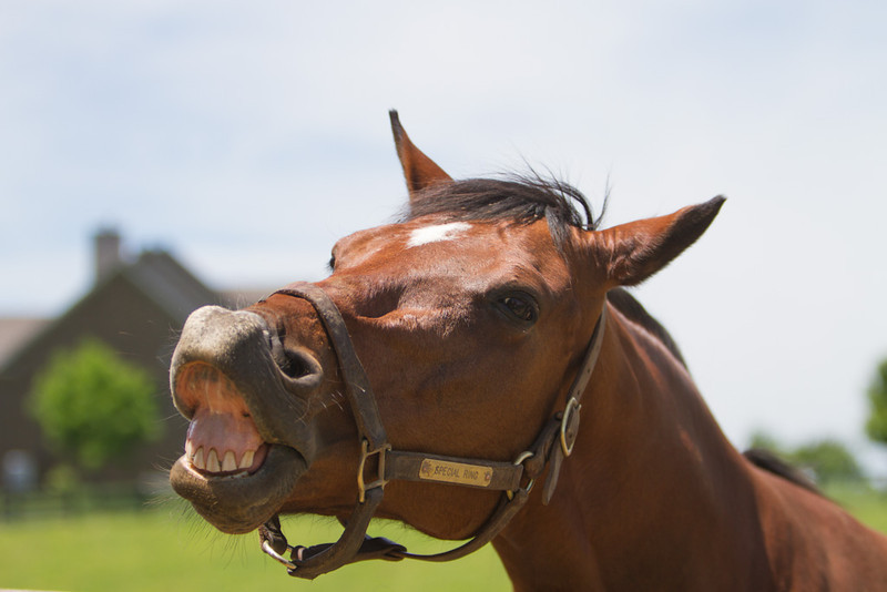 IMAGE: http://www.photographybymalcolm.com/Equine/Miscellaneous/Old-Friends-Equine/i-R3Q73ph/0/L/IMG_2926-L.jpg