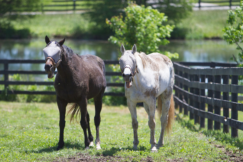 IMAGE: http://www.photographybymalcolm.com/Equine/Miscellaneous/Old-Friends-Equine/i-mzPWbDM/0/L/IMG_2848-L.jpg