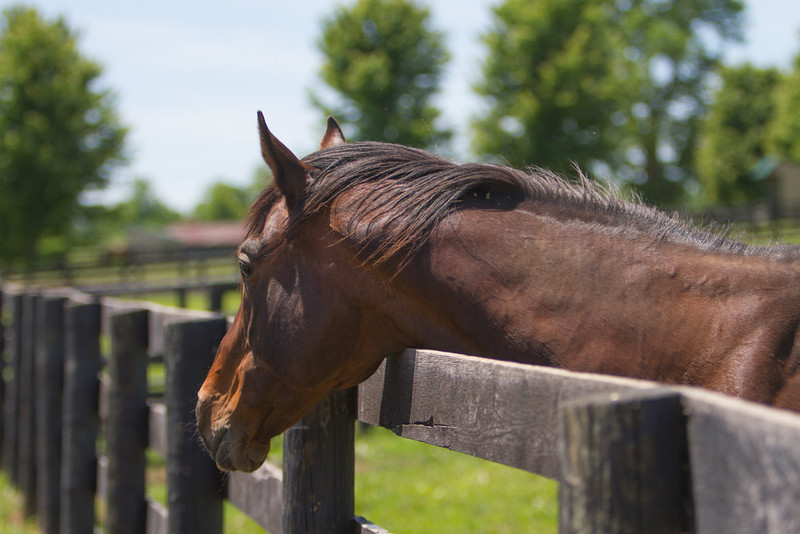 IMAGE: http://www.photographybymalcolm.com/Equine/Miscellaneous/Old-Friends-Equine/i-ndPDHrc/0/L/IMG_2843-L.jpg