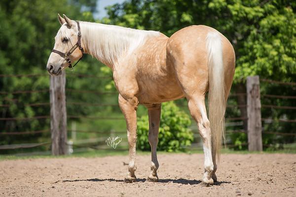 Palomino Barrel Horse