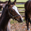 Frankel filly foal - The National Stud, Newmarket (October 2018)