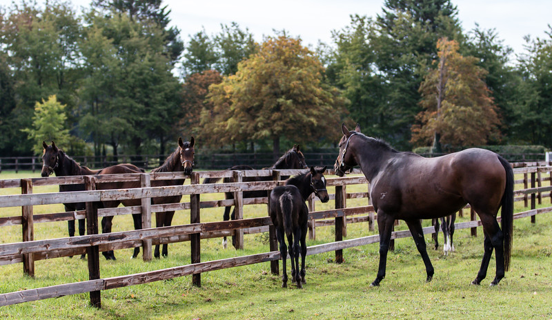 Mare, Foals & Weanlings - The National Stud, Newmarket (October 2018)