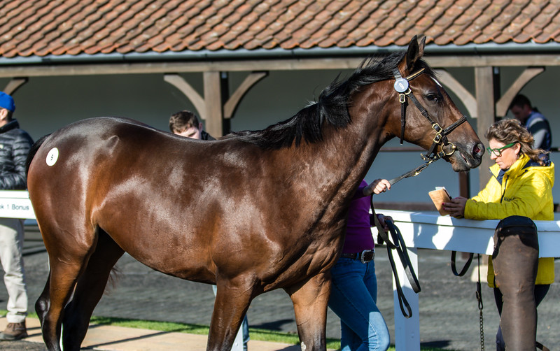 Lot 9 - A Bay Filly by Dansili (GB) out of Nicella (GER) in 2017