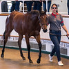 Lot 85 - A Bay Filly by Charm Spirit (IRE) out of Salicorne (USA) in 2017