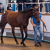 Lot 66 - A Bay Colt by Dark Angel (IRE) out of Relation Alexander (IRE) in 2017