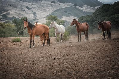 """Grey Mare"" aka Montana with her friends."